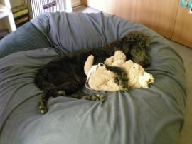 Lottte snoozing with puppy